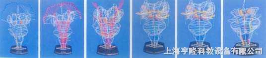 脑神经核和脑神经传导放大模型