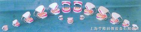 自然大固定牙护理带舌头模型