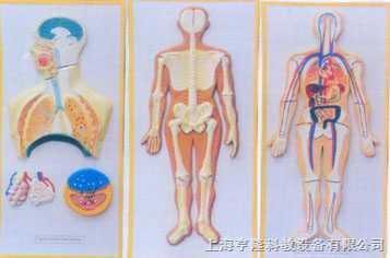 人体血液循环系列浮雕