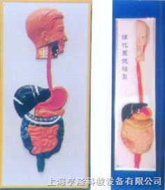 人体消化系列浮雕