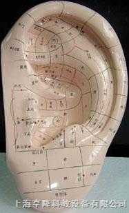 人体针灸模型(耳针穴模型.耳针穴位模型40CM)