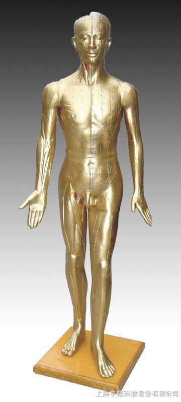 人体针灸模型178CM(青铜色)