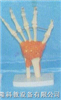 手关节功能模型
