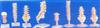 大型颈椎带颈动脉/后枕骨、椎间盘与神经模型