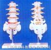 腰椎带骶骨尾骨骨椎间盘突出的教学12bet