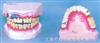 烟民式口腔牙列模型