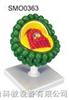 艾滋病病毒模型
