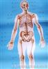 《人体解剖挂图》局部解剖(67张)