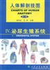 人体解剖挂图(泌尿生殖系统)