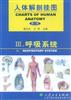 人体解剖挂图(呼吸系统)