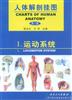 人体解剖挂图-运动系统