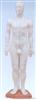人体针灸模型60CM