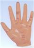 手针灸模型13CM