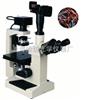 XSP-18CE倒置生物显微镜 上海绘统光学仪器厂