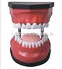豪华型牙护理保健模型(32颗牙,可脱卸)(放大5倍)