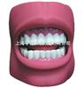 牙中文保健12bet(带脸颊)(自然大)